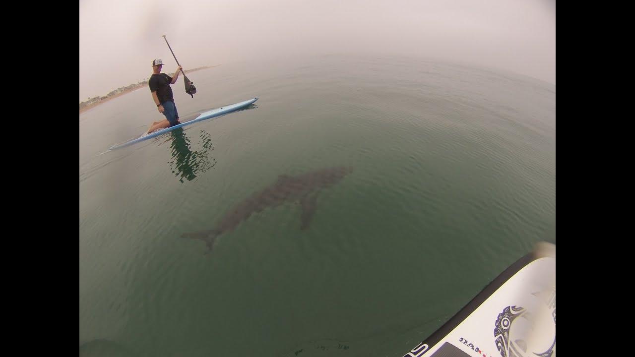 Sharks In Long Beach Ca