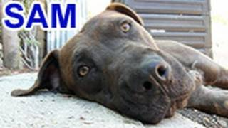 Please help Sam find a home and share this video.  Thanks!