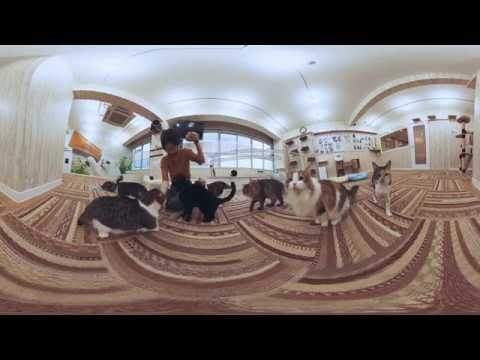 猫カフェVR 猫カフェ れおん  VR360