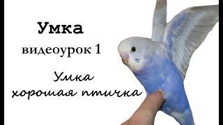 """🎤 Учим попугая по имени Умка говорить, видеоурок 1: """"Умка хорошая птичка"""""""
