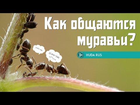 Вопрос: Умеют ли муравьи считать?