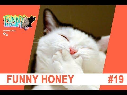 funny-horney-kami-andrews