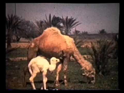 Tripoli Libya Radio Broadcast 1965