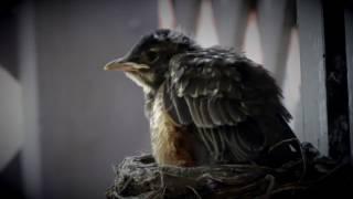 FLY LITTLE BIRD (Sunny Castillo jamming)