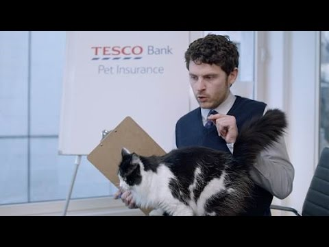 Dogs & cats run amok in our Tesco Bank pet insurance research group
