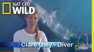 Q&A: Protected Species | Shark Attack Experiment Live!