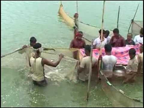 Banglar Krishi Episode no 307 (Floating Veg Culture+ Floating Case Fish culture)
