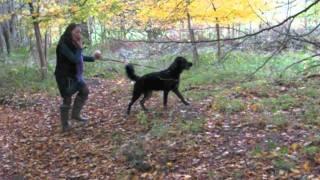 Truffle Hunters Dog School Mugshots