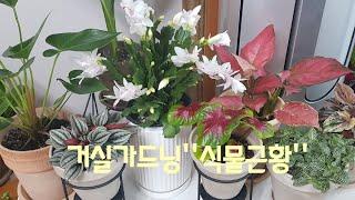[거실가드닝] 새식물소개와 봄을맞은 거실 식물근황!!!