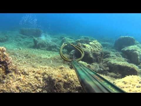 Spearfishing in the Adriatic Sea by Anže Smole: Chapter 2