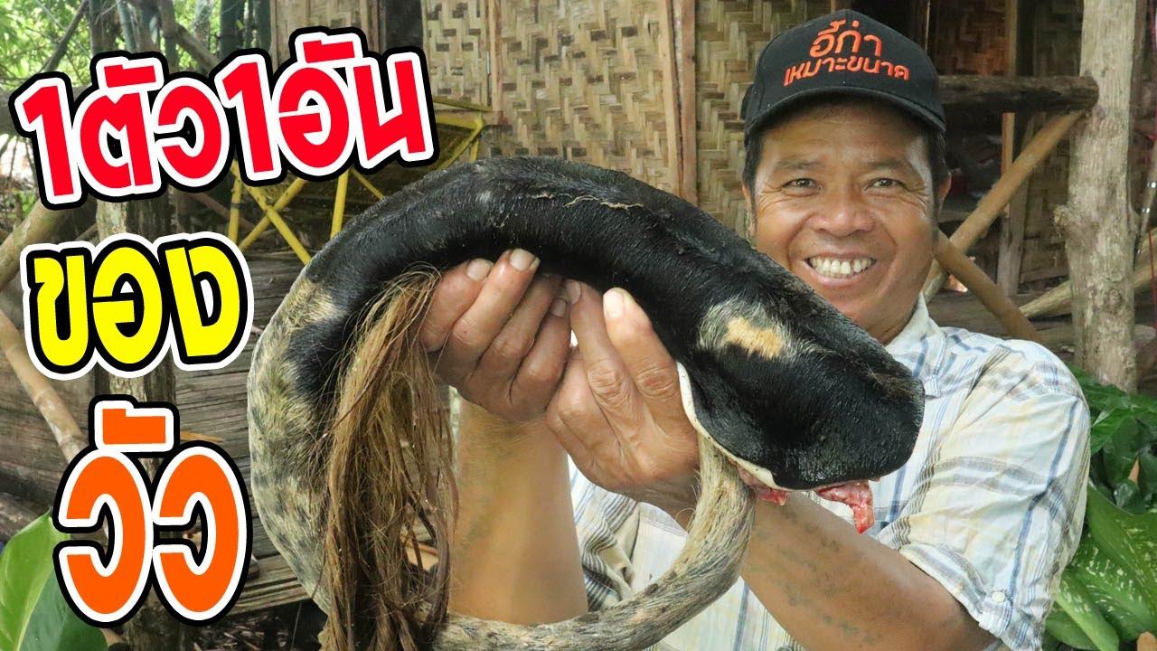 ทำอาหารในป่า หลามหางวัว สูตรครัวป่าไผ่ เมนูสุดแปลก!  l SAN CE