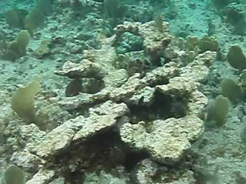 National Trust Snorkel 1 Aug 09 Cayman Brac