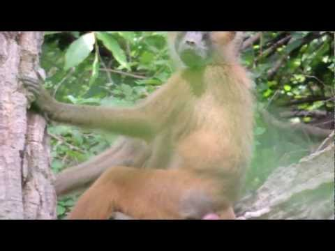 Baboons at Kaing West National Park