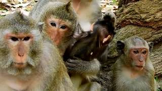 Awesome! Surprise milk for baby Goerge, Julina jealousy when see him got milk so warm