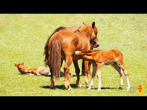 Curso Reprodução de Cavalos - O Parto - Cursos CPT