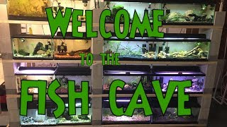 FULL Fish Room Tour - ALL MY TANKS!!! - Garage Fish Room