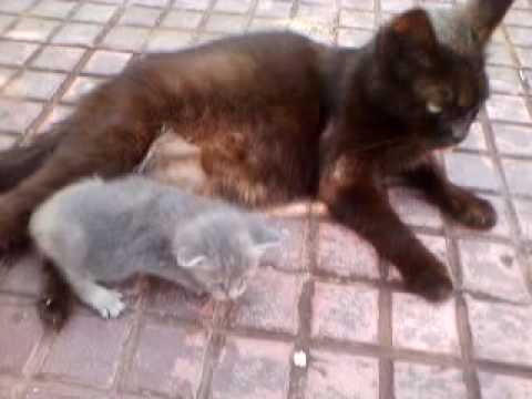 Mother Cat Adopts Orphaned Kitty