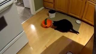 Cats vs Halloween Bowl