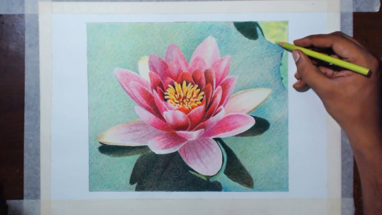 Drawing a water lily prismacolor pencils youtube mightylinksfo