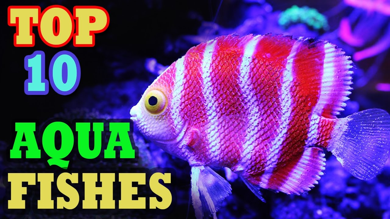 Amazing world top 10 most expensive tropical fish in for Most expensive fish in the world