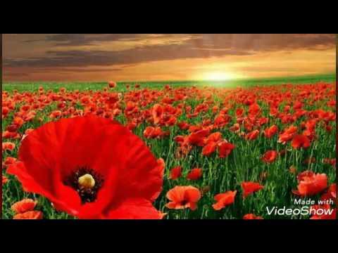 КЮН 78 летия со дня рождения Надежда нашей мамы. Вечная память Помним, любим, скорбим.