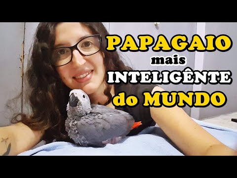 CURIOSIDADES SOBRE O PAPAGAIO DO CONGO - UDP