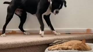 Смешные кошки 2019 Новые приколы с котами до слёз смешные коты приколы 2019 funny cats animals