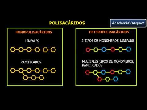 Polisacáridos: Generalidades