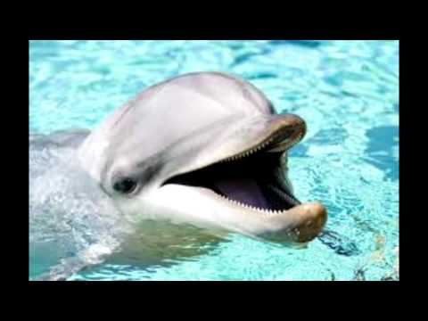 1 Hour of Dolphin