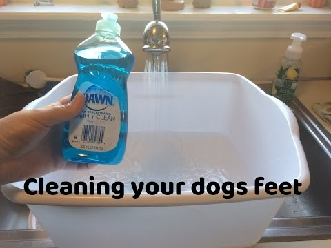 Dog Care Tips | Cleaning Your Dogs Feet | SchnauzerMom