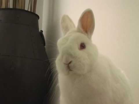 The Stare: Bunny pwnz kevjumba, Baron Davis and Jessica Alba