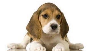 Video Secrets Basic To Dog Training