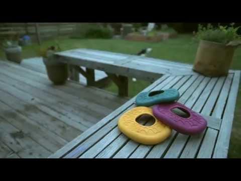 Dash flying dog disc
