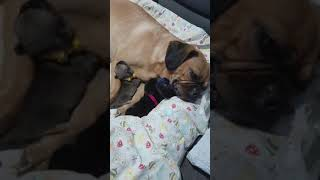 Daisy & pups   Live on Facebook