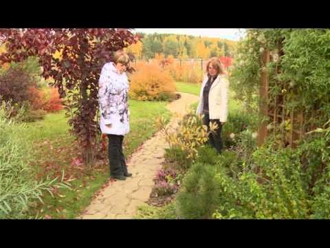 видео: Декоративные идеи для сада. Ландшафтные хитрости. Выпуск 126