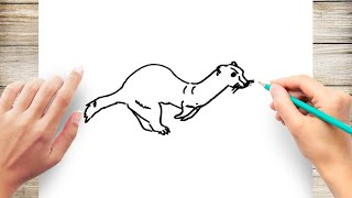 How to Draw Ferret for Kids Step by Step Simple
