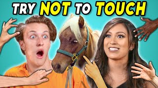 Try Not To Touch Challenge (ft. a Mini Horse!)