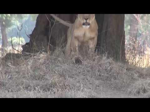 Zimbabwe Safari July 2014