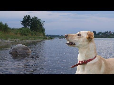 Dog Water Sports