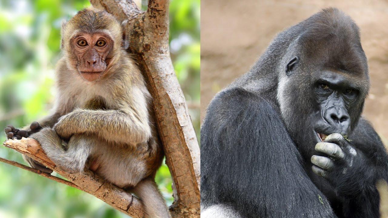 Anatomía De Los Monos Información Y Características De Los