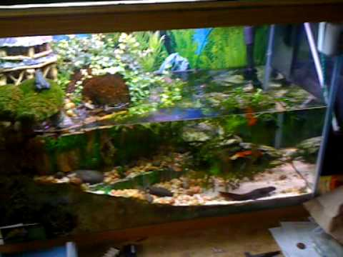 Newt And Frog Fish Tank Terrarium Youtube