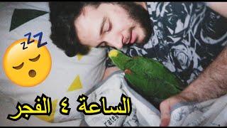 ميزو مصر ينام عندي بالفراش تحت البطانية واشيله ويرجع..
