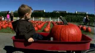 Pumpkin picking at the long island pumpkin farm - enjoy pumpkin patches in long island