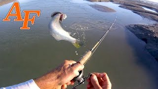 How many Barramundi can I catch on 1 Lure in 1 Spot?  EP.422