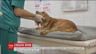 В Україні створили перший банк крові для собак