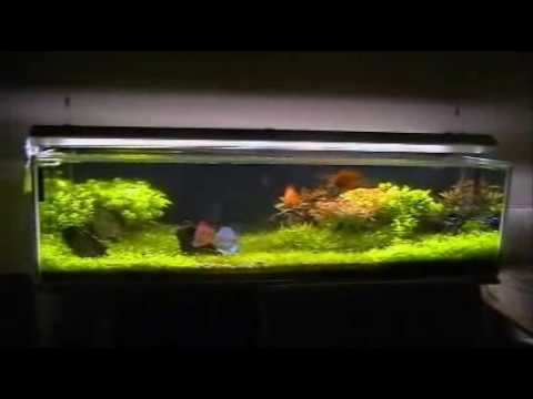 Aquarium Garden of Stone Planted Discus Fish Tank YouTube
