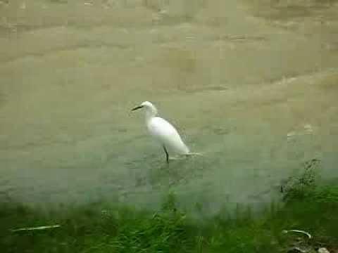 Bird in river