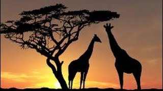 фильм документальный 2018 Животный мир Африки. Дикие животные. Документальный фильм.