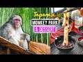 JAPANESE MONKEY PARK & BAMBOO FOREST in Kyoto