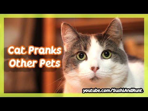 Cat Hides Behind Door To Prank Other Pets !